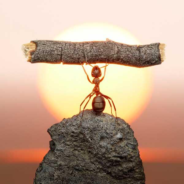 10 curiosidades sobre as formigas