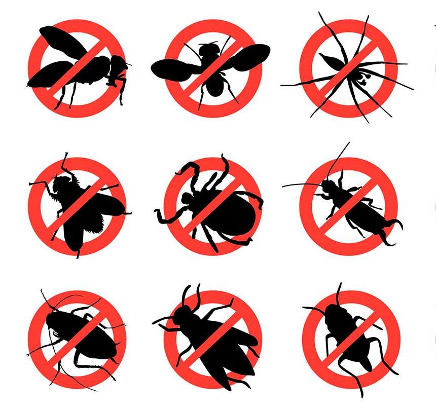 Clima quente e úmido acelera a proliferação de insetos