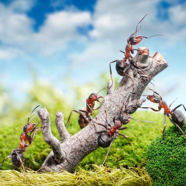 Conheça os fatos mais curiosos sobre as formigas