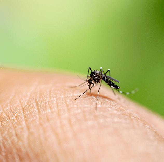 Dengue: 340 cidades brasileiras correm risco de epidemias