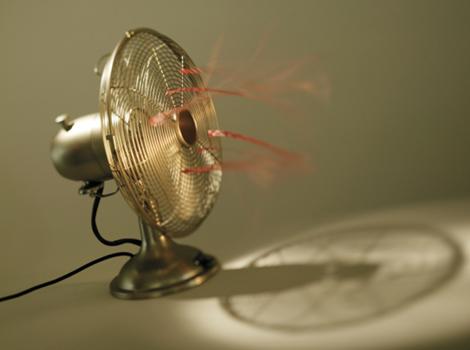 Saiba por que as pragas urbanas proliferam mais no calor