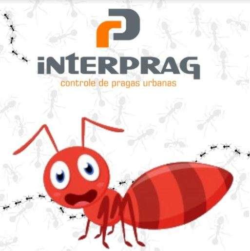 Dedetizadora de formigas