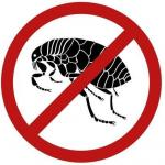 Dedetizadora de pulgas